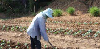 กรมส่งเสริมการเกษตรเผย 12 มาตรการรับมือสถานการณ์ฤดูแล้ง ปี 2563/64