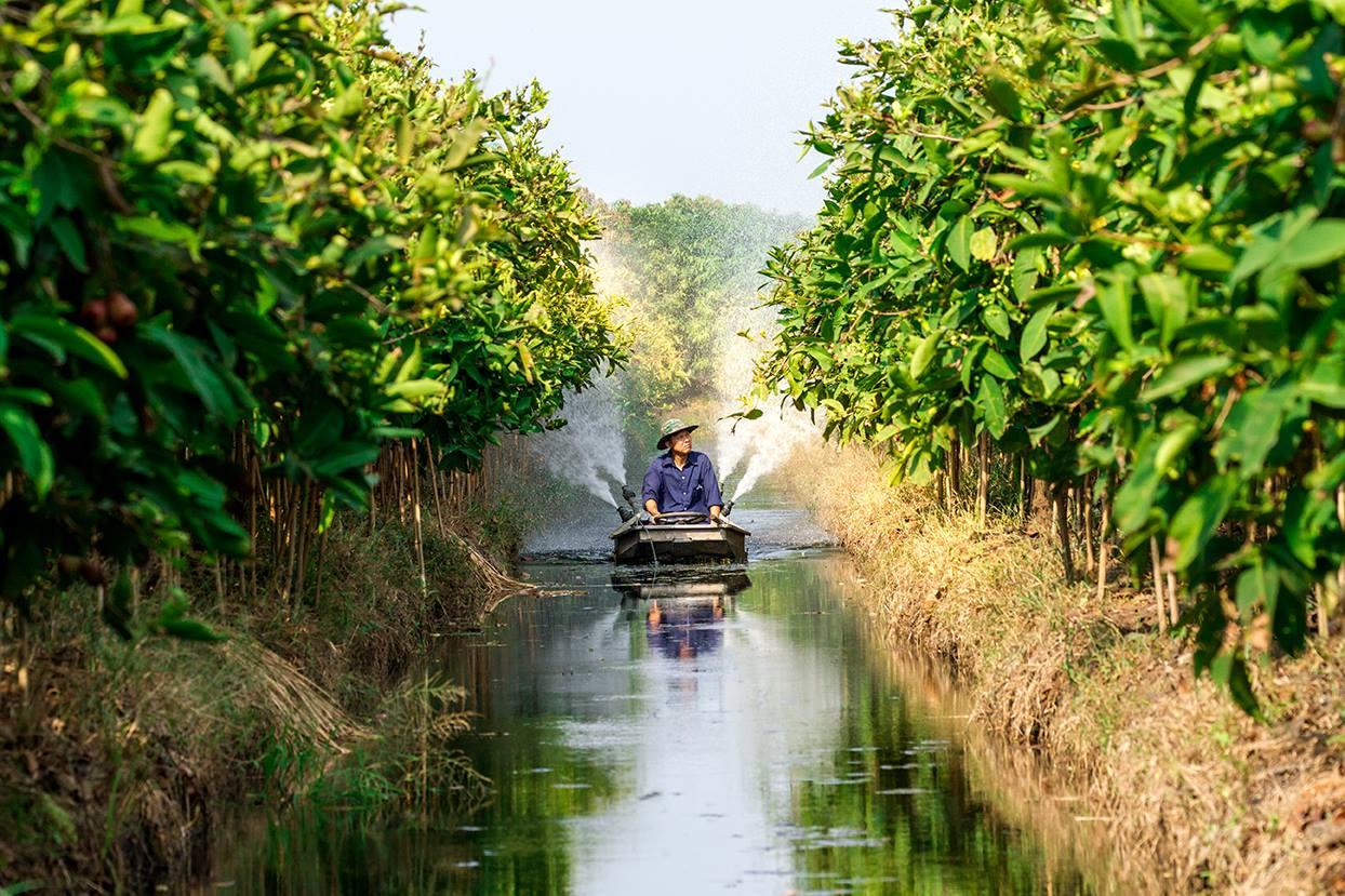 ให้น้ำด้วยเรือ ตามแบบฉบับของสวนผลไม้จังหวัดราชบุรี