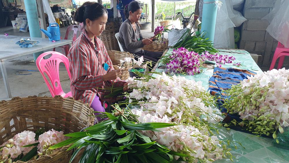 พนักงานกำลังจัดช่อดอกกล้วยไม้เพื่อส่งตลาด
