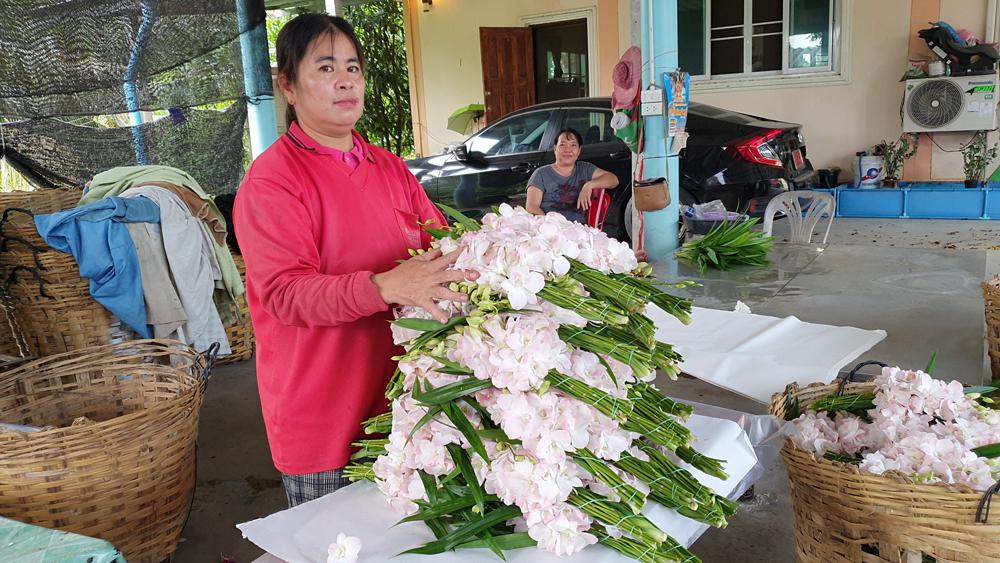 สวนกล้วยไม้ตัดดอก 40 ไร่ ที่นนทบุรี