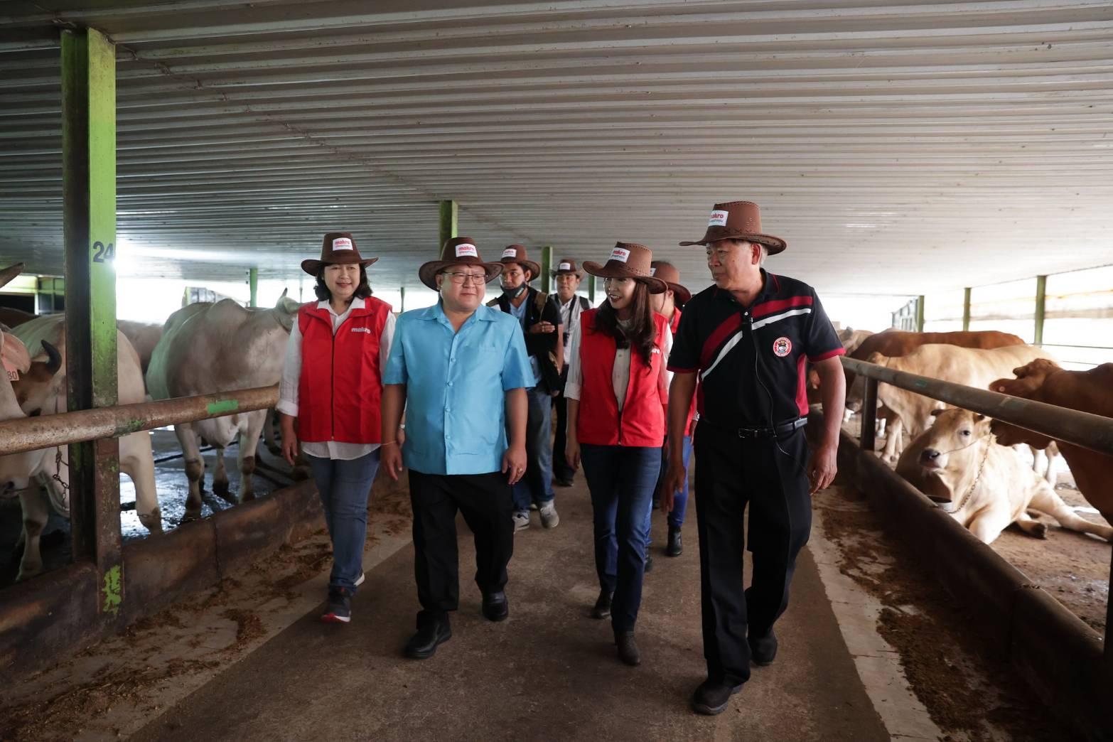แม็คโคร ผุดโมเดลเกษตรยั่งยืน หนุนผู้เลี้ยงวัวไทย ผลิตเนื้อพรีเมียม ชูจุดแข็งตลาดนำการผลิต ปรับระบบการเลี้ยง สร้างรายได้เพิ่มกว่า 2 หมื่นต่อตัว