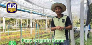 """""""ปลูกผักอินทรีย์ที่ว่ายาก แต่การทำตลาดยากกว่า"""" เปิดใจวิศวกรหนุ่มแห่งเพียวออร์แกนิค ฟาร์ม"""