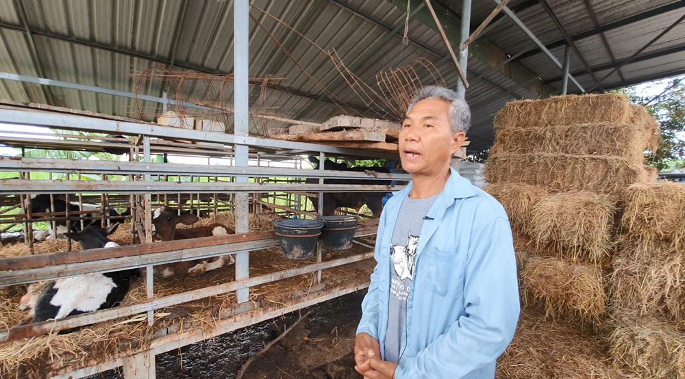 """คุณสง่า คงขันตะ เจ้าของฟาร์มโคนม """"สันติฟาร์ม"""" อ.ด่านมะขามเตี้ย จ.กาญจนบุรี"""
