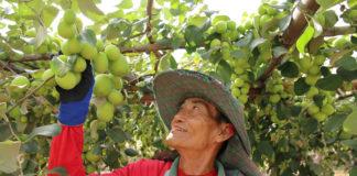 """ทดลองปฏิบัติการ """"มดแดงโมเดล"""" เตรียมช่วยเกษตรกรประชาสัมพันธ์ช่วงผลผลิตออกเยอะๆ"""