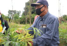 สภาเกษตรกรเกรงหมดพื้นที่ปลูกมันสำปะหลังเหตุจากโรคไวรัสใบด่าง เตรียมเสนอ อบจ.ร่วมสร้างความยั่งยืน