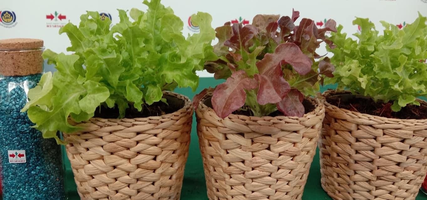 ปลูกผักสวนครัวเพื่อสร้างความมั่นคงทางอาหาร