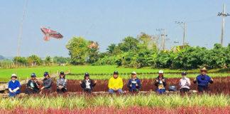"""ปลูกข้าวสรรพสี (ข้าว 7 สี) """"ทำนาเพื่อการท่องเที่ยว"""" ฝันยิ่งใหญ่ของทายาทเกษตรกรไทย"""