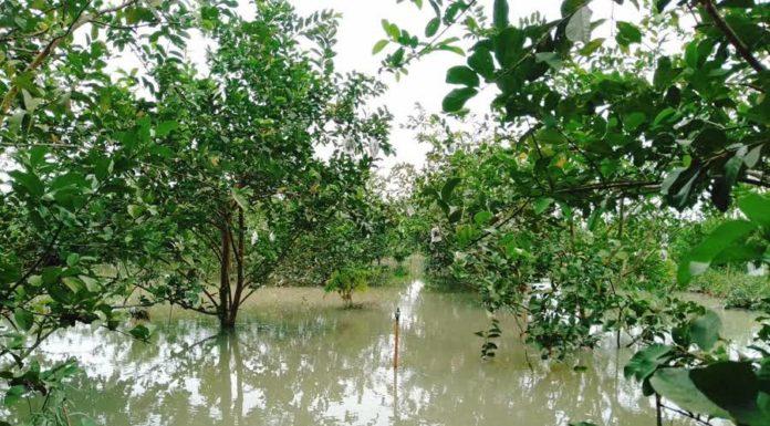 สั่ง จนท.เกษตรฯ เตรียมฟื้นฟูสวนไม้ผลที่ได้รับผลกระทบจากน้ำท่วมในภาคใต้