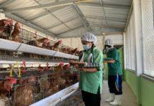 """ซีพีเอฟร่วมเติมประสบการณ์ เยาวชนไทยวิถีใหม่ แหล่งเรียนรู้ ในโครงการ""""เลี้ยงไก่ไข่เพื่ออาหารกลางวันนักเรียน"""""""