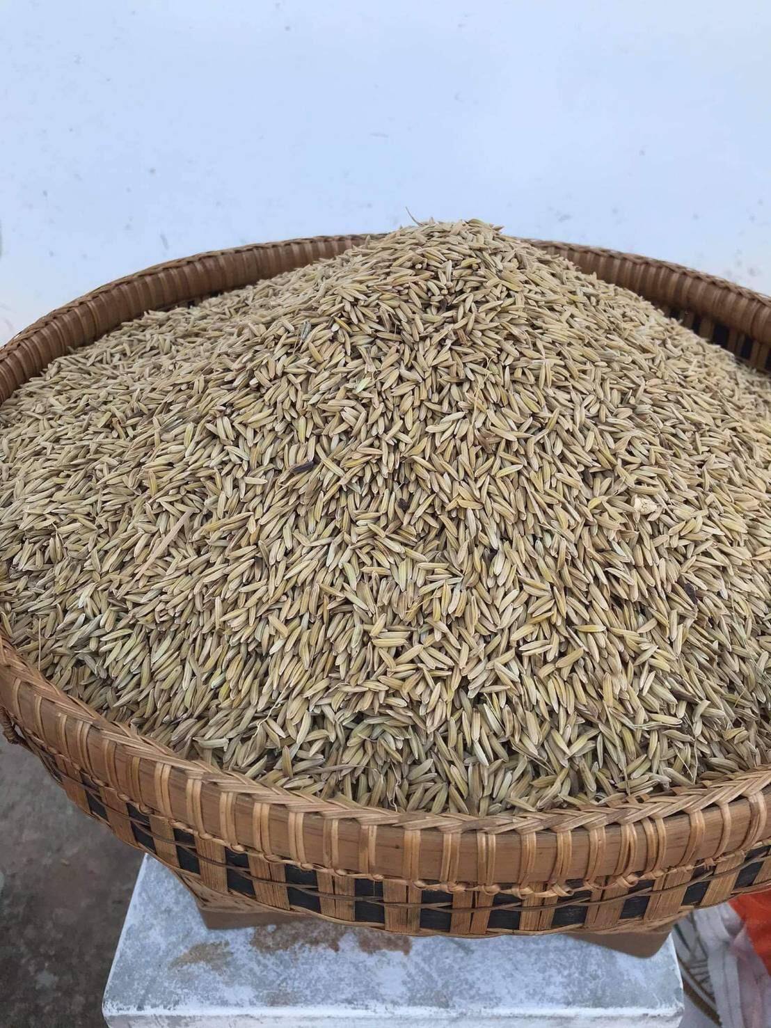 กรมการข้าวถวายเมล็ดพันธุ์ข้าวพันธุ์ดี แด่สมเด็จพระกนิษฐาธิราชเจ้า กรมสมเด็จพระเทพรัตนราชสุดาฯ