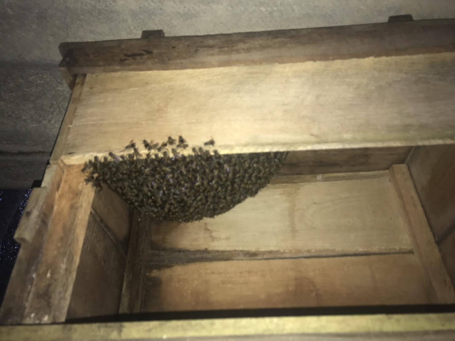 แมลงเศรษฐกิจ ผึ้งโพรงบ้านไสใหญ่ กับความสำเร็จแปลงใหญ่ สร้างมูลค่ากว่าปีละ 3.5 ล้านบาท