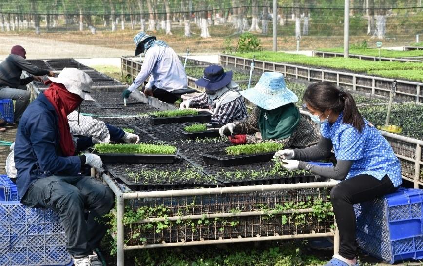 ศูนย์ขยายพันธุ์พืชที่ 9 จังหวัดสุพรรณบุรี ผลิตพืชพันธุ์ดีสนับสนุนเกษตรกร สร้างผลผลิตดี มีคุณภาพ