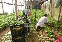 """สวพส.โชว์ผลงานชุมชนแม่จริม จังหวัดน่าน """"ชุมชนลดการเผาด้วยวิถีเกษตรตามแนวทางโครงการหลวง"""""""