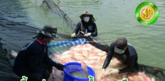 นิสิตคณะประมง ม.เกษตรฯ เรียนรู้การเลี้ยงสัตว์น้ำจืดระบบน้ำหมุนเวียนซีพีเอฟ แก้สิ่งแวดล้อมได้