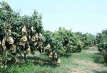 เกษตรฯ ตั้งคณะทำงานร่วมขับเคลื่อนพัฒนาคนและผลิตภัณฑ์สินค้าผลไม้ตอบโจทย์ตลาดนำการผลิต