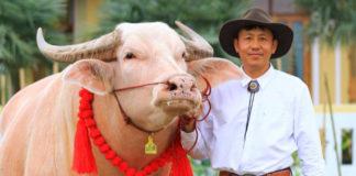 ปีนี้คนเลี้ยงควายได้เฮ!! เกษตรกรเลี้ยงควายระบบโรงเรือนคว้าดีเด่นแห่งชาติปี 2564