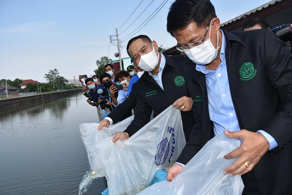 กรมประมงปล่อยพันธุ์ปลาน้ำจืดพื้นที่กรุงเทพฯ วันเดียว 3 ล้านตัว