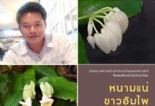 """นักพฤกษศาสตร์ ม.เกษตรศาสตร์ ค้นพบ พืชชนิดใหม่ของโลก """"หนามแน่ขาวอัมไพ"""" จากอุทยานแห่งชาติภูลังกา จังหวัดนครพนม"""