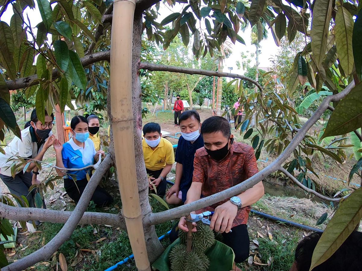 """ชวนติดตาม """"ทุเรียนพื้นเมืองนนท์ 60 สายพันธุ์"""" ภายใต้โครงการอนุรักษ์สวนทุเรียนนนทบุรี"""
