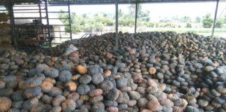 แม็คโคร ผนึกกระทรวงเกษตรฯ หนุนเกษตรกรผู้พิการและครอบครัวสู้โควิด รับซื้อฟักทองระบายผลผลิตล้น เพิ่มรายได้ 1 หมื่นบาทต่อครัวเรือน ฝ่าวิกฤตไปด้วยกัน