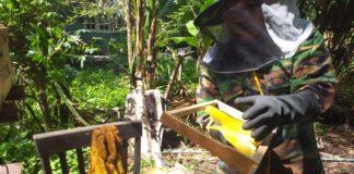 กรมส่งเสริมการเกษตร เชิญชมการถ่ายทอดสดงานวันผึ้งโลก เรียนรู้การใช้ประโยชน์จากผึ้งและแมลงผสมเกสร