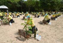 ซีพี-เมจิ ร่วมฟื้นฟูป่าต้นน้ำ 10,000 กล้า พื้นที่อุทยานแห่งชาติน้ำตกสามหลั่น จ.สระบุรี