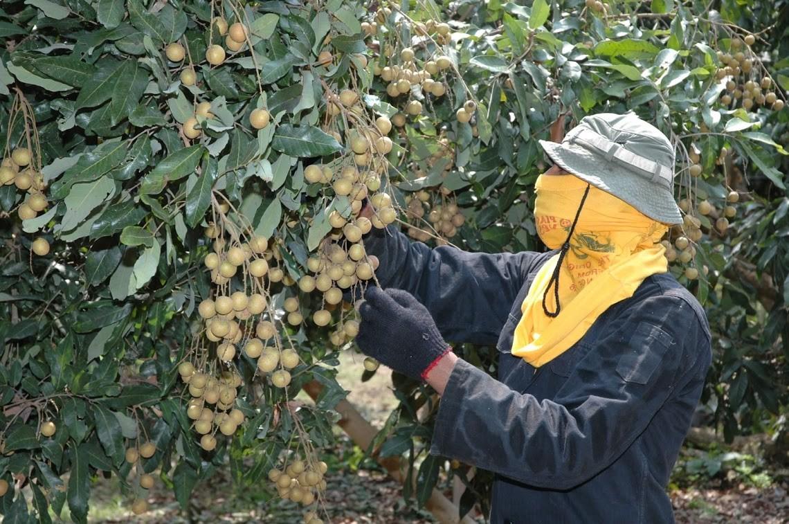 เกษตรฯ เน้นย้ำจีนตรวจเข้มข้นผลไม้นำเข้าป้องเชื้อโควิด พร้อมชงใช้ด่านตงซิง-ผิงเสียงหลังจีนไม่ยืดเวลาให้บริการ