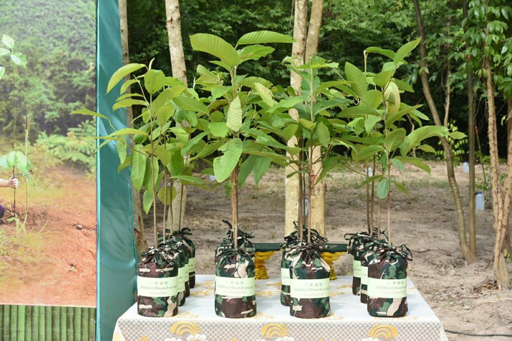 ซีพี-เมจิ ร่วมฟื้นฟูป่าต้นน้ำ พื้นที่อุทยานแห่งชาติน้ำตกสามหลั่น จ.สระบุรี
