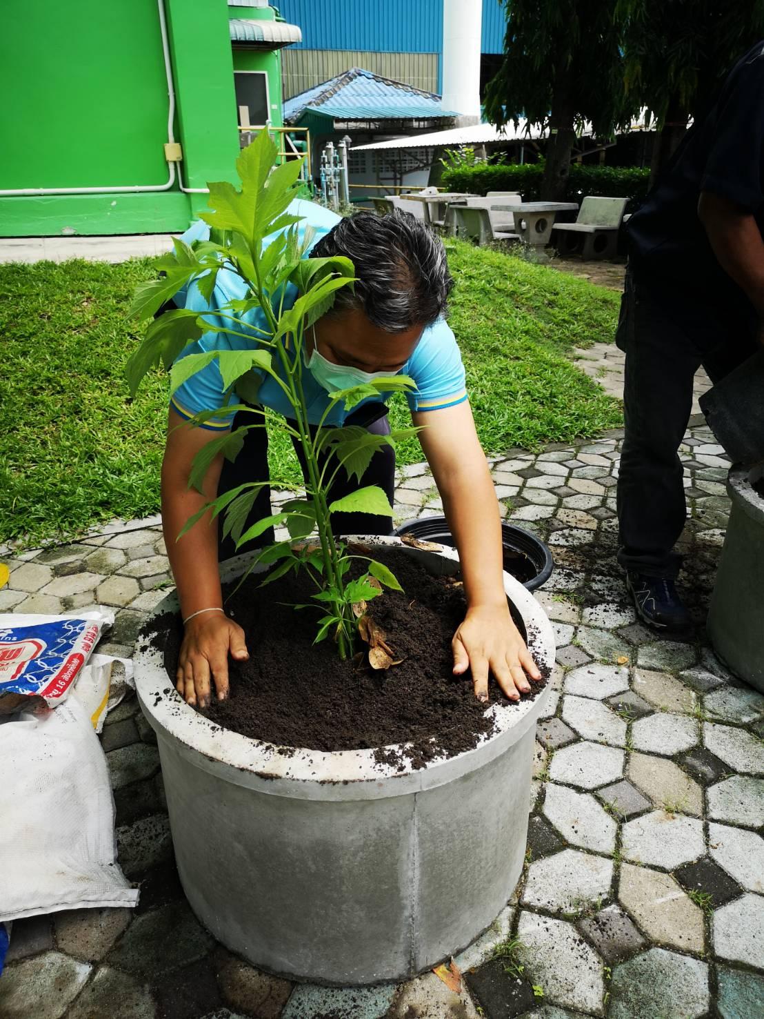 โรงงาน-ฟาร์ม CPF ทั่วประเทศ ร่วมปลูกต้นไม้