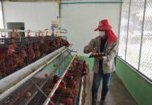 รร.เลี้ยงไก่ไข่เพื่ออาหารกลางวันนักเรียน สร้างความมั่นคงทางอาหาร คลังเสบียงหนุนชุมชน ฝ่าโควิด-19