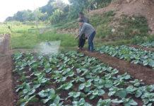 ขยายผลส่งต่อเทคโนโลยีชีวภัณฑ์และปุ๋ยชีวภาพ พุ่งเป้าเกษตรกรกว่า 8 พันราย 57 จังหวัดผลิตได้ใช้เป็น