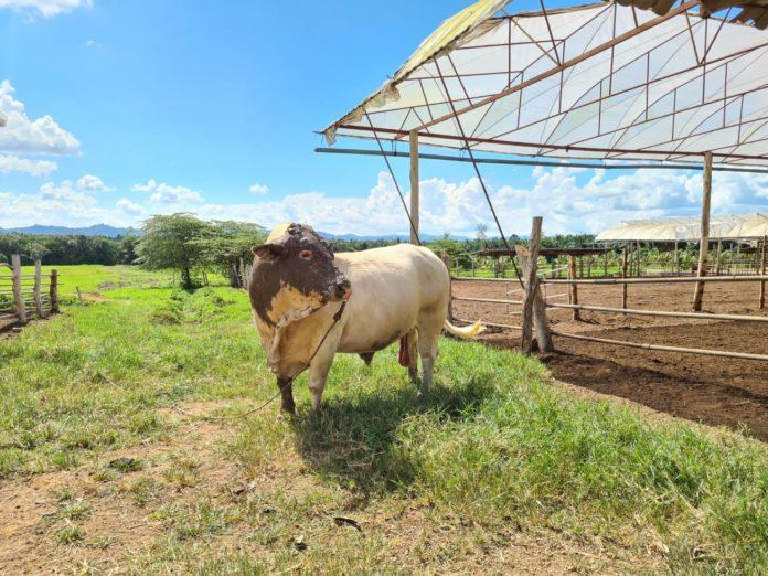 """มก.จัดเสวนาวิชาการ """"วิกฤต...โรคลัมปี สกิน โรคระบาดในสัตว์"""" เร่งสร้างความเข้าใจที่ถูกต้องแก่เกษตรกร และผู้บริโภค"""