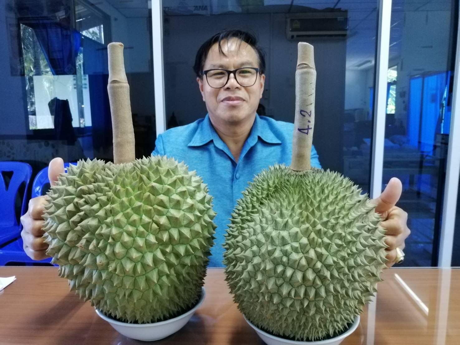 นายมนตรี เชื้อใจ เกษตรจังหวัดกาญจนบุรี กับทุเรียนก้านยาว และหมอนทอง..ผลผลิตคุณภาพที่พร้อมส่งตรงผู้บริโภคคนไทยในฤดูกาลนี้