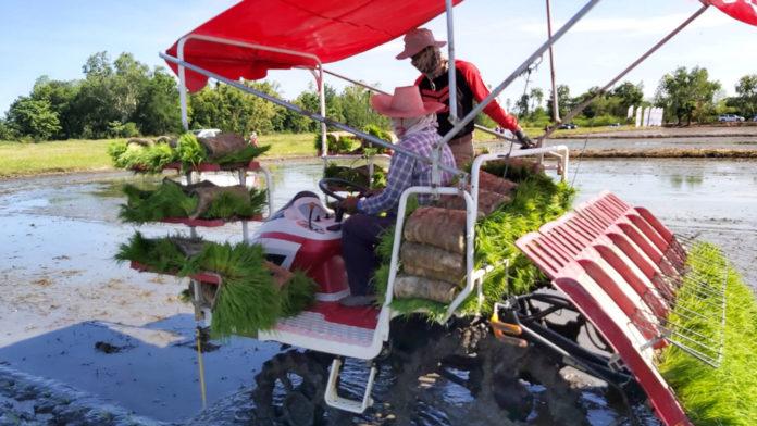 ยันม่าร์ เดินหน้าพัฒนาศักยภาพเกษตรกรไทยส่งเสริมการปลูกข้าวอย่างยั่งยืน ด้วยรถดำนา ช่วยลดต้นทุน เพิ่มผลผลิตในพื้นที่ จ.พิจิตร