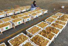 มนัญญา สั่งกรมวิชาการเกษตร รุดแก้ปมส่งออกลำไยไปจีนต้องไม่สะดุด