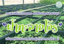 """กรมส่งเสริมการเกษตร ส่งเสริมปลูกและแปรรูป """"ฟ้าทะลายโจร"""" พร้อมเตรียมมอบกล้าพันธุ์แก่เกษตรกรเร็วๆ นี้"""
