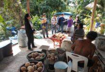 โควิด-19 ชะลอความต้องการมะพร้าวครึ่งปีแรก สศก. แจ้งผู้แปรรูปมะพร้าวช่วยรับซื้อผลผลิตจากเกษตรกร