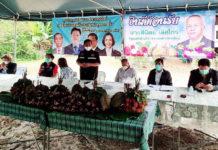 """""""ฟรุ้ทบอร์ด"""" เสนอเยียวยามังคุดใต้ พร้อมเปิดโครงการ """"เกษตรแฮปปี้"""" ช่วยชาวสวนผลไม้ฝ่าวิกฤติโควิด"""