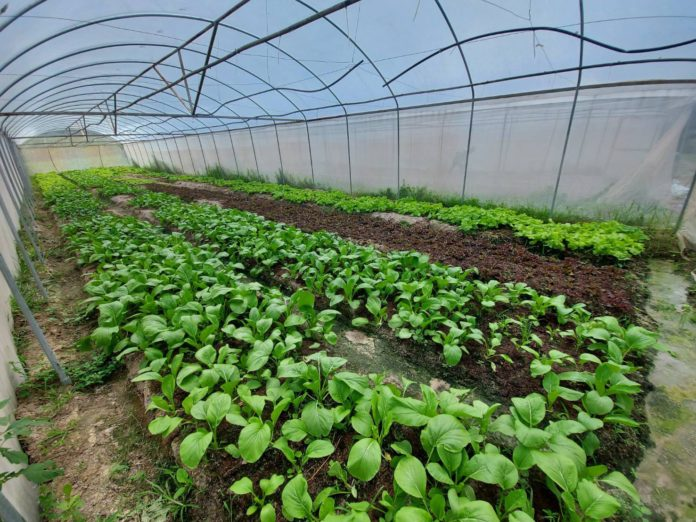 เกษตรฯ แจงผลการดำเนินงานโครงการยกระดับแปลงใหญ่ด้วยเกษตรสมัยใหม่และเชื่อมโยงตลาด ด้านพืช ยกเว้นข้าว ทำได้แล้ว 100% พร้อมประสานงานอีก 5 หน่วยงาน เร่งรัดดำเนินการจัดซื้อจัดจ้างให้ได้ตามแผน เพื่อประโยชน์ของเกษตรกร