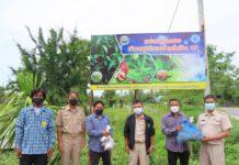 เกษตรฯ เปิดตัว 3 ชุมชนต้นแบบภาคใต้ปลูกพืชสมุนไพรต้านโควิด