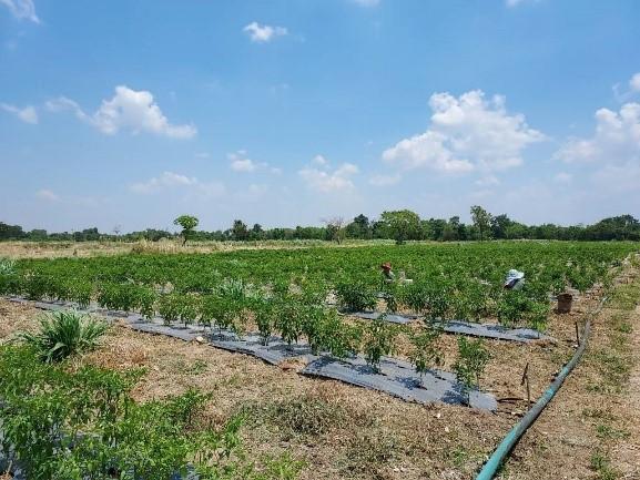 เกษตรกรชื่นใจ เฮรับ 2 เด้ง โครงการส่งเสริมและพัฒนาอาชีพเพื่อแก้ไขปัญหาที่ดินทำกินฯ
