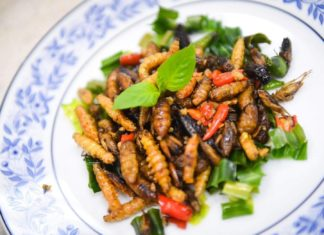 """KU-FIRSTแนะอาหารใหม่ """" จิ้งหรีด"""" แมลงกินได้ต้นแบบ แหล่งโปรตีนทางเลือก .. สู่ตลาดโลก"""