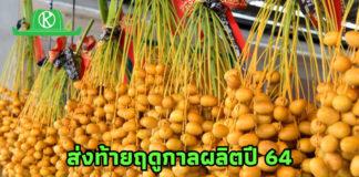 เกษตรกรนนทบุรีชี้ 3 แนวทางพัฒนาการปลูกอินทผลัมสู่ความยั่งยืน..มั่นใจตลาดยังไปได้