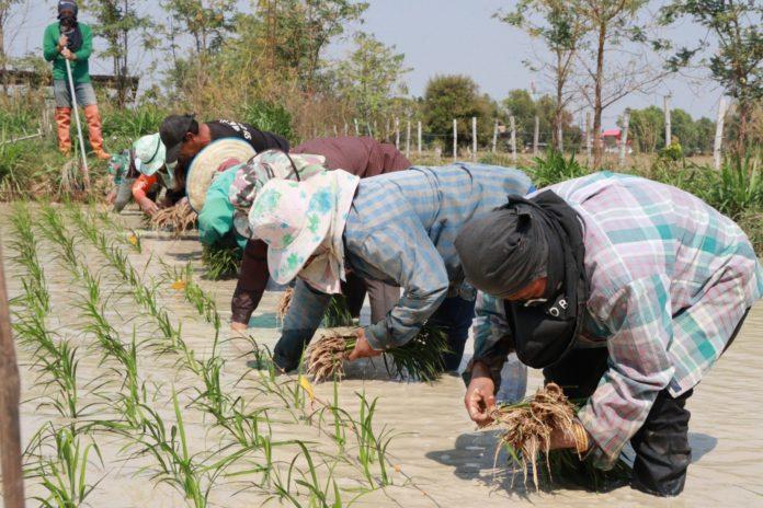 กลุ่มอินทรีย์ เตรียมเฮ เกษตรฯ ชง จ่ายเงินอุดหนุนกว่า 917 ล้าน