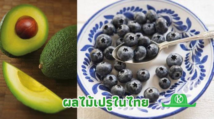 เปรูยึดไทยเป็นศูนย์กลางการค้าสินค้าเกษตรในภูมิภาค อะโวคาโดและแครนเบอร์รี่ ติดอันดับขายดี
