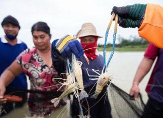 """เกษตรกรผู้เลี้ยงกุ้งกาฬสินธุ์ รวมกลุ่มสู้โควิด-19 รับแรงงานคืนถิ่น เดินหน้าเลี้ยง """"กุ้งก้ามกราม"""" มาตรฐาน GAP ส่งแม็คโครทั่วอีสาน เพิ่มโอกาสในวิกฤต"""