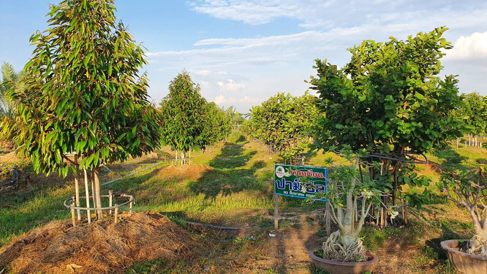 วิกฤตโควิดเป็นโอกาสของเศรษฐกิจสีเขียว เกษตรกรทั่วโลกจะถูกพัฒนาให้เป็นผู้ประกอบการ