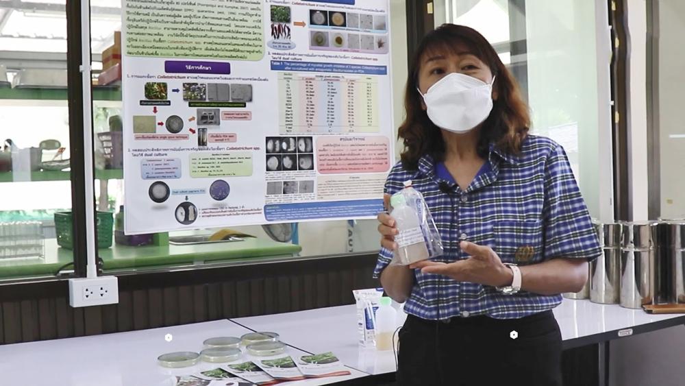 โรคกุ้งแห้งพริกสยบ!! ปราบด้วยชีวภัณฑ์บีเอส ดีโอเอ-19W6