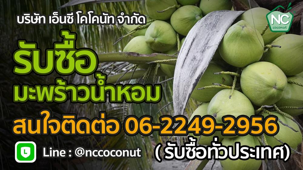 มะพร้าวน้ำหอมไทยชื่นใจทั่วโลก เอ็นซีโคโคนัทพัฒนาตัวเจาะมะพร้าวให้ดื่มได้ง่ายๆ