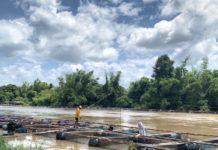 กรมประมง...เผยความคืบหน้าการให้ความช่วยเหลือ เกษตรกรผู้เลี้ยงปลานิลในกระชังลำน้ำชีจากเหตุอุทกภัย